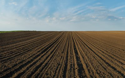 Dealing with Ruts this Spring
