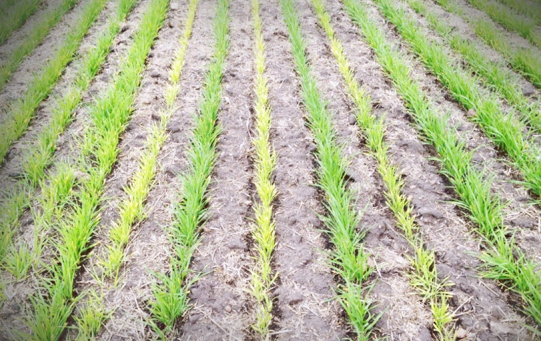Using Herbicides that Contain Residual Products Effectively