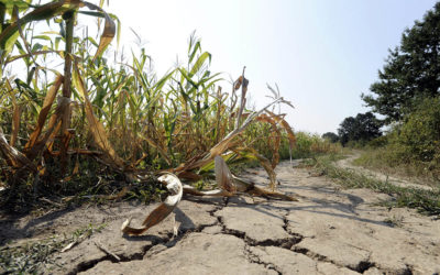 Managing Fertility After a Drought