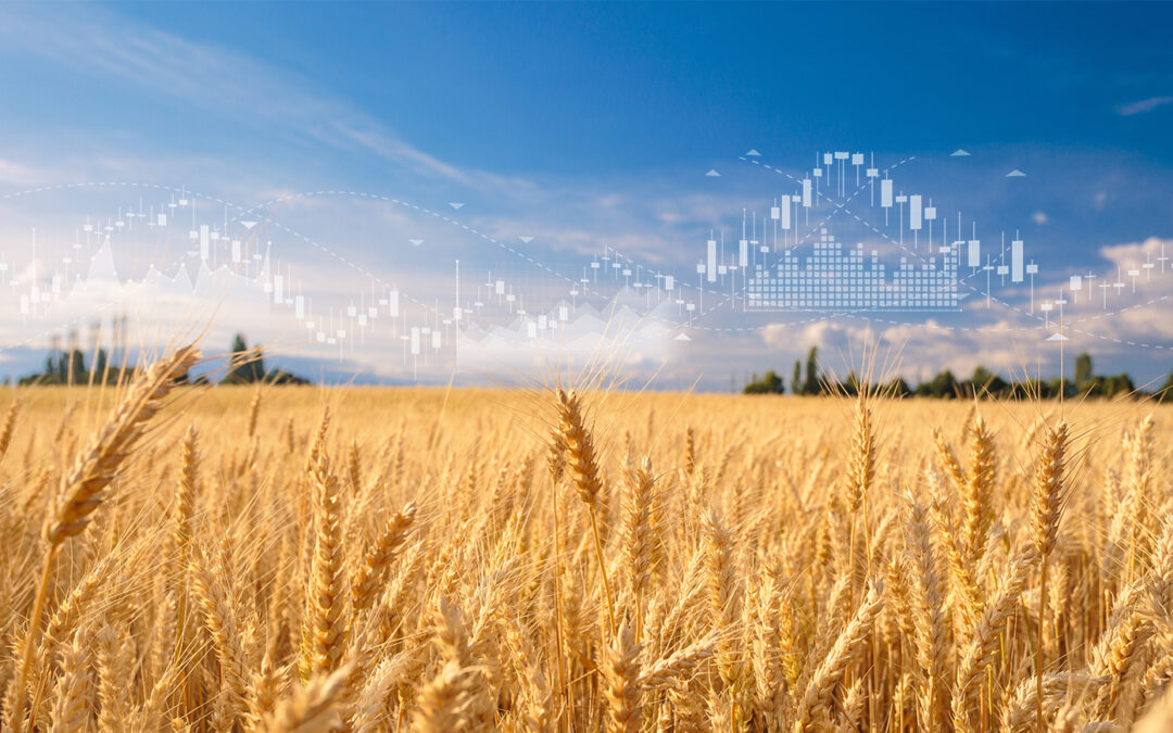 Wheat Field with Data